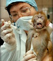 baby_monkey_injection
