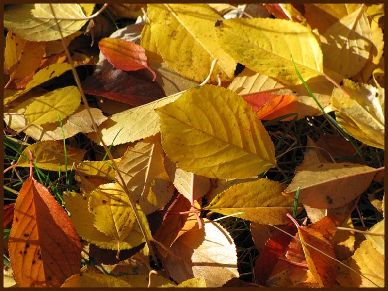 Листья  с сад