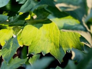 green-leaves-182188_1280-400x300