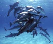 Почему-акула-боится-дельфина