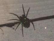 11062017-spider-1
