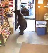 02072017-bear-in-the-shop-1