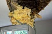 25082017-honey-on-ceiling-1