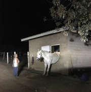 03102017-horse-escape-4