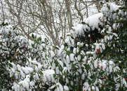 sneg-nakanune-vesnyi-pogoda-v-varne-19